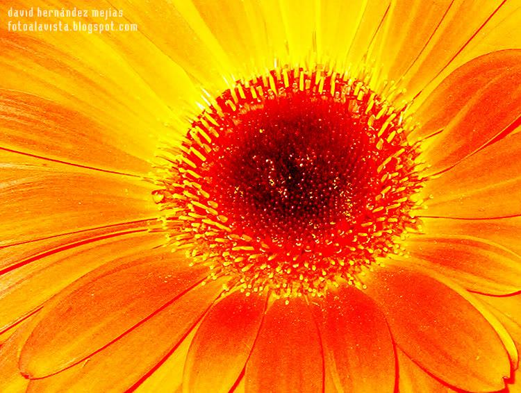 Ojo en flor