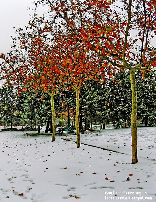 Christmas Trees... ¡FELIZ NAVIDAD!