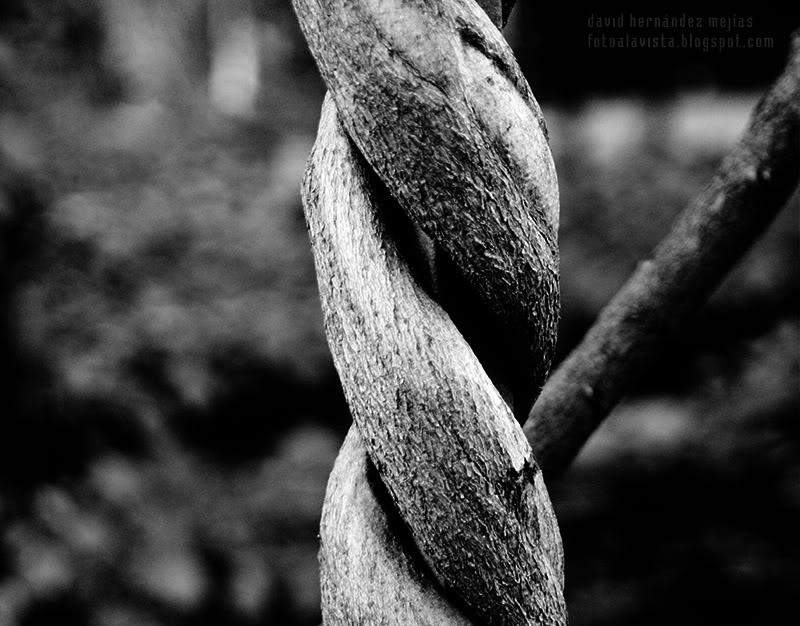 Cadenas de madera